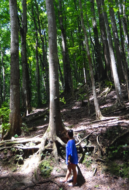 The Dark Side of Bohol's Bilar Manmade Forest + An Appeal ...