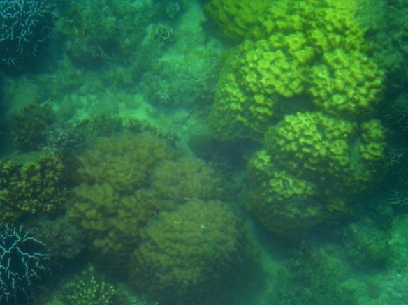 corals at olotayan island, capiz