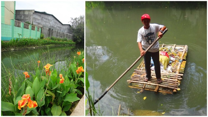 Flowers at Estero de San Miguel, Pasig River, Philippines, Pasig River Warrior