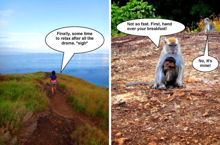 white monkey, summit, Bud Bongao, or Mount Bongao, Tawi-Tawi, Mindanao, Philippines