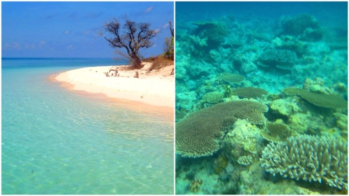 Apo Reef, Apo Island, snorkeling, Sablayan, Occidental Mindoro, Philippines