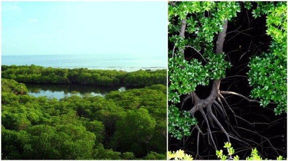lighthouse view, lagoon, mangroves, mangrove roots, Apo Island, Apo Reef, Sablayan, Occidental Mindoro, Philippines
