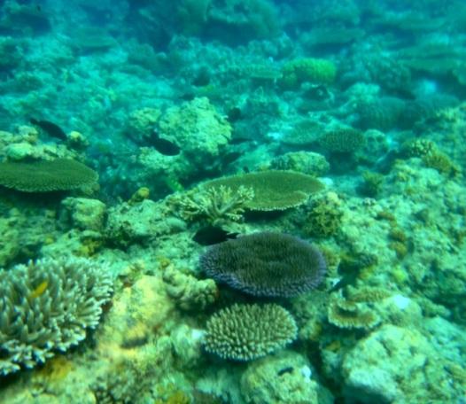 Snorkeling, Apo Island, Apo Reef, Sablayan, Occidental Mindoro, Philippines
