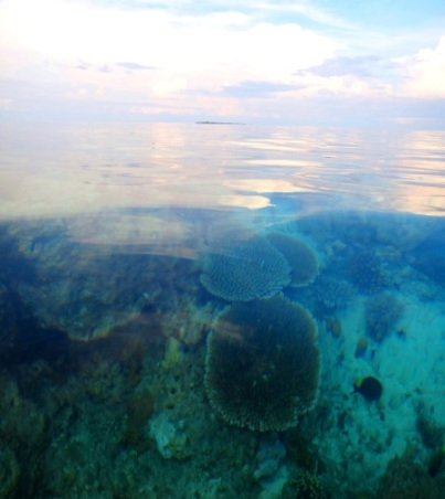 snorkeling, clear water, Apo Island, Apo Reef, Sablayan, Occidental Mindoro, Philippines
