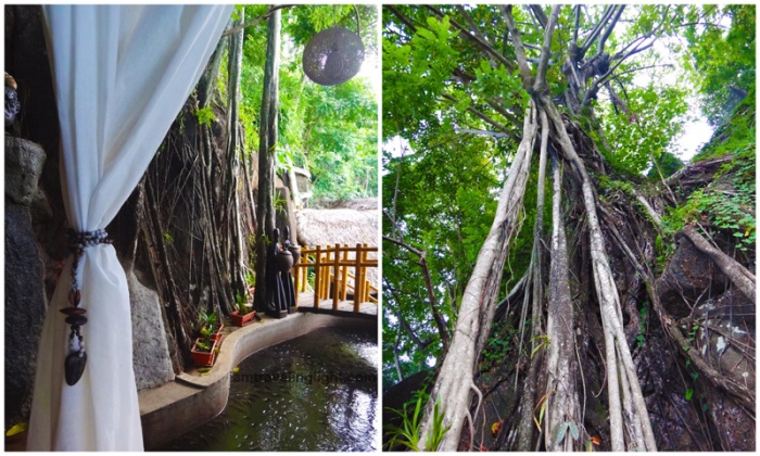 Fish pond, decades-old balete tree, spa vacation, Luljetta's Hanging Gardens and Spa, Loreland Farm Resort, Antipolo, Philippines, near Manila