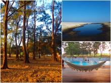 Zambawood feature image agoho