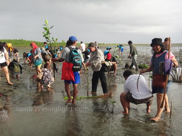 mangrove tree planting, Kalibo, Aklan, for typhoon protection (protected against Haiyan - Yolanda - and Typhoon Frank)