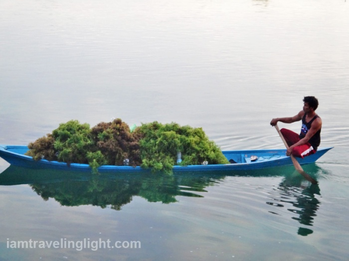 seaweed farming and harvesting, remote Sibutu Island, Tawi-tawi