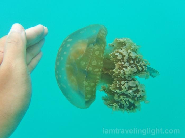 Sohoton, Bucas Grande Island, stingless jellyfish, clear water, Lubugan Lagoon, Surigao del Norte.jpg