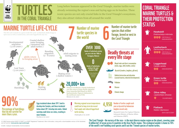 Infographic from WWF marine turtles in the Coral Triangle, pawikan information, etc.