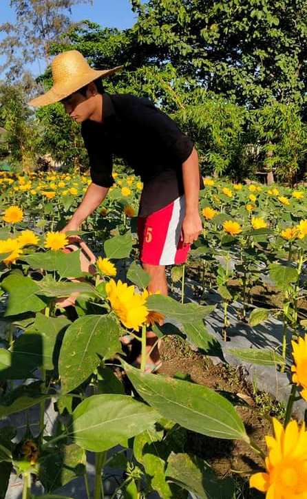 March 18 Julyan watering, minding the sunflowers at the farm, youth with autism, sunflower farm, San Narciso, Zambales