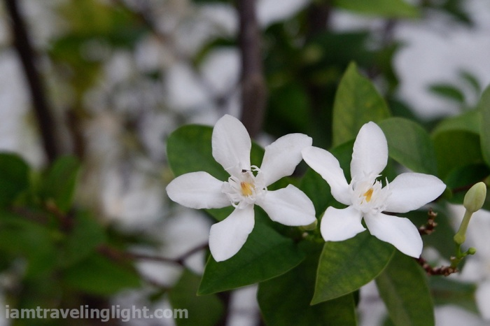 photo assignment, what grows, angel flowers
