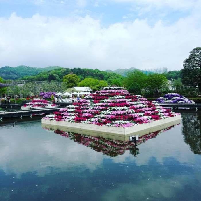 flower pyramid, Ashikaga Flower Park, Japan