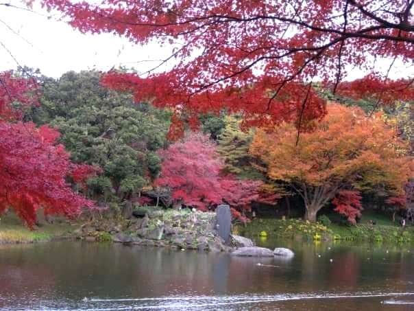 Koishikawa Korakuen Garden, old garden, Tokyo, autumn (1)