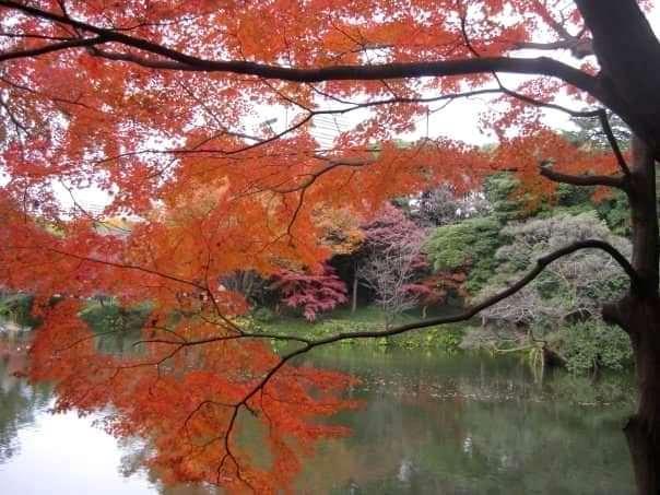 Koishikawa Korakuen Garden, old garden, Tokyo, autumn (3)