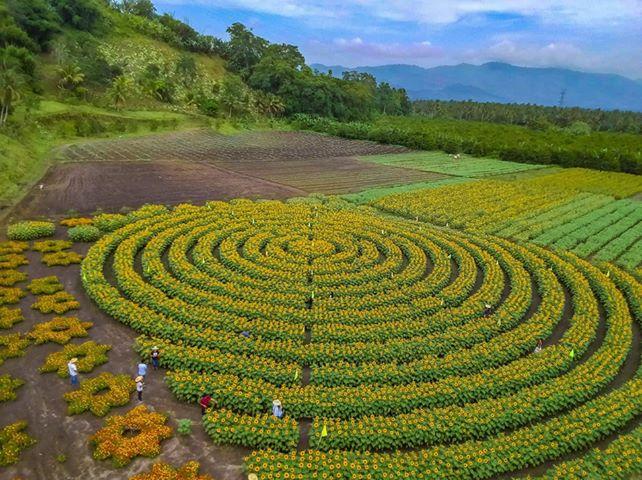 Mariano's Blooming Petals, marigolds, cosmos mandala, pattern, Mariano's Blooming Agritourism Park, Tupi, South Cotabato