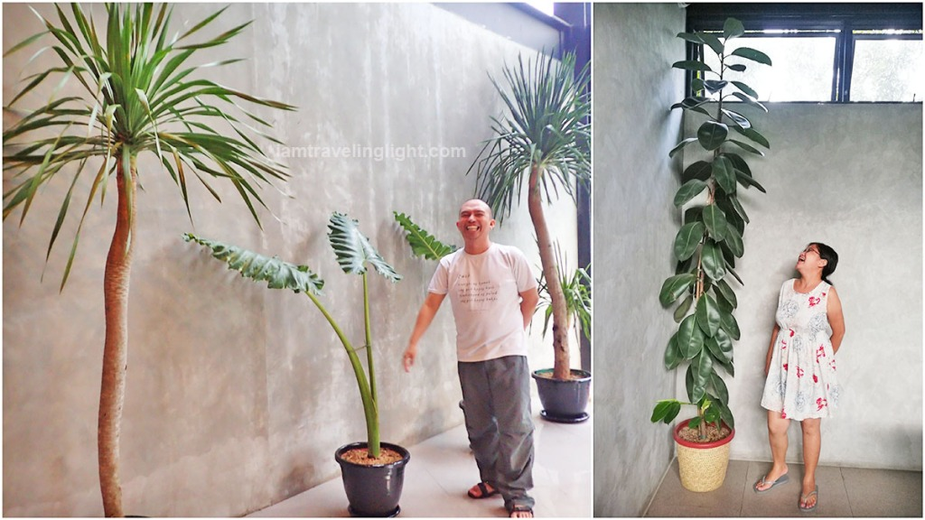 rubber plant, plantito plantita, pool, hot spring resort, Casa Tropica, Pansol, Laguna